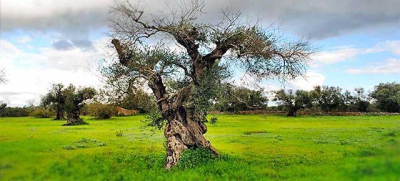 Puglia: