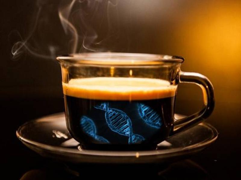 Nel Dna il gene del caff&